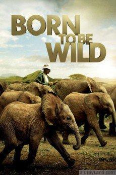Born to Be Wild HD Movie Download