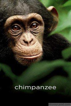 Chimpanzee HD Movie Download